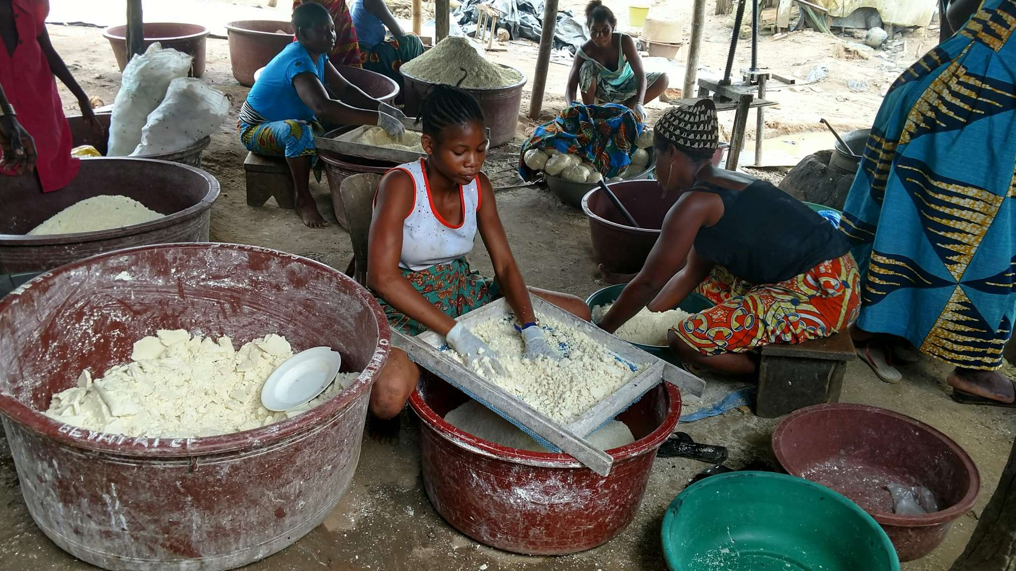 Crazy for Cassava, Manic for Manioc, and Yums for Yuca!